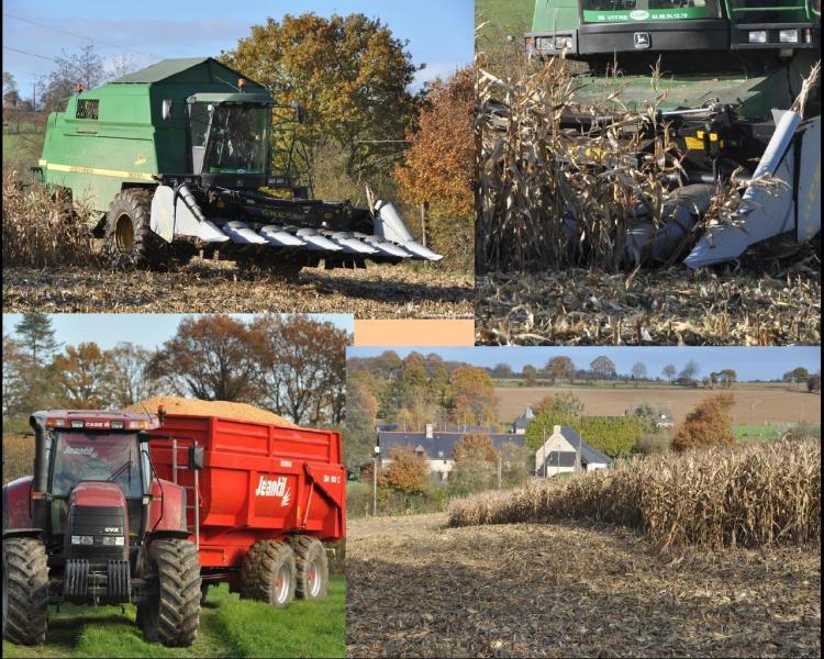 Ma photo-Bernard-2012-39 Las, mon champ de maïs est nu
