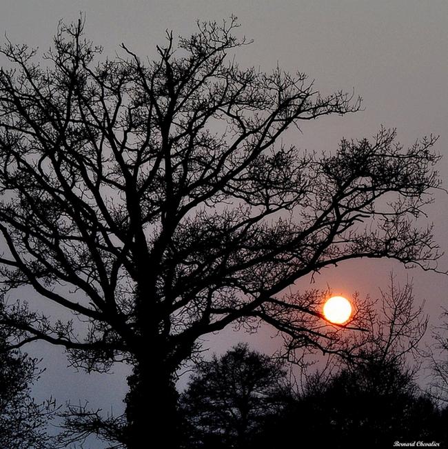 Ma photo-Bernard-2013-15- soleil sur la branche