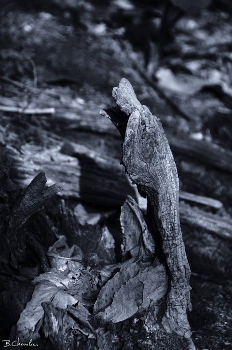 personnage forêt-maphoto-Bernard-2013-21