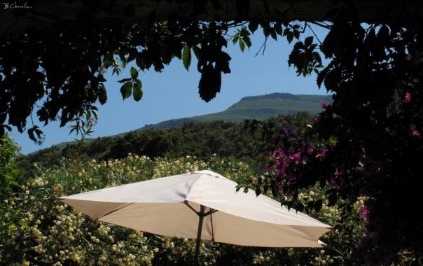 Sisco-parasol