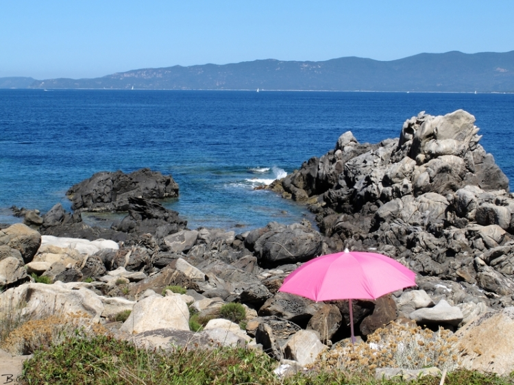 parasol rose-Campomoro-blog