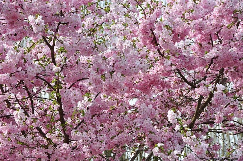 Fleurs-blog