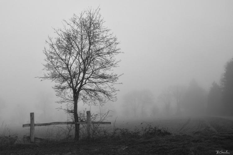 blog-bc-2014-4 barrière dans le brouillard