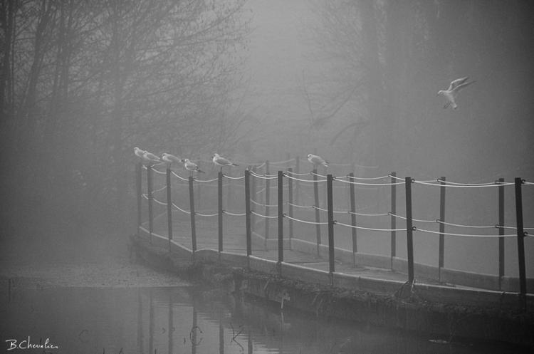 blog-bc-2014-39-Mouettes-brume-passerelle