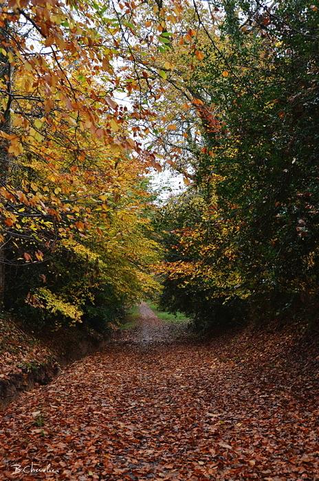 blog-bc-2014-42-chemin d'automne