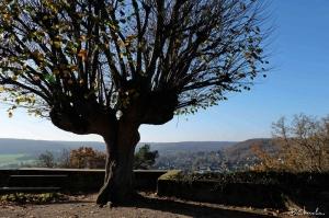 blog-bc-2015-5- -arbre Chateau de Chevreuse