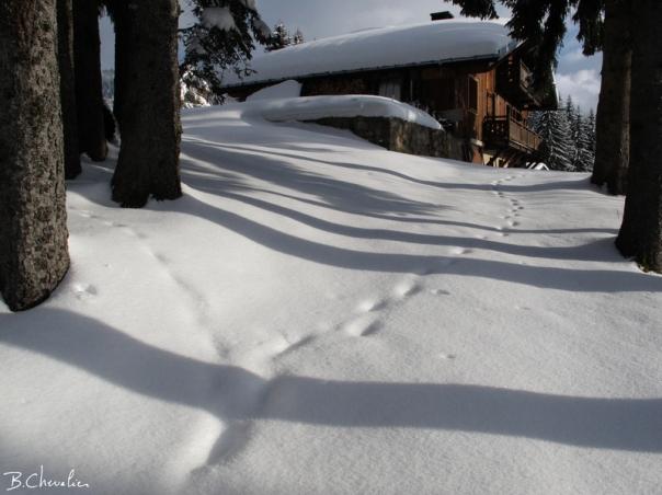 blog-bc-2016-11 traces dans la neige