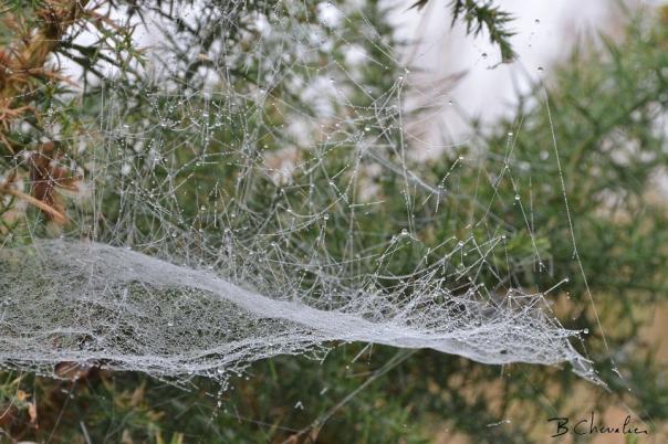 blog-bc-2017-35 the web2