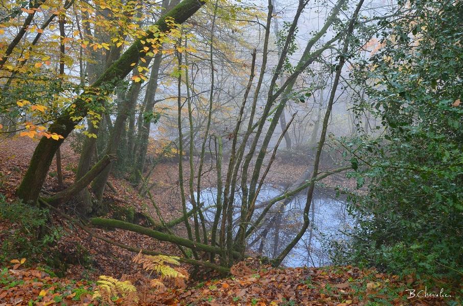 blog-bc-2017-40 Forêt de la Corbière