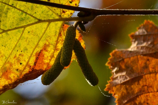 blog-bc-2017-41 Chatons d'automne