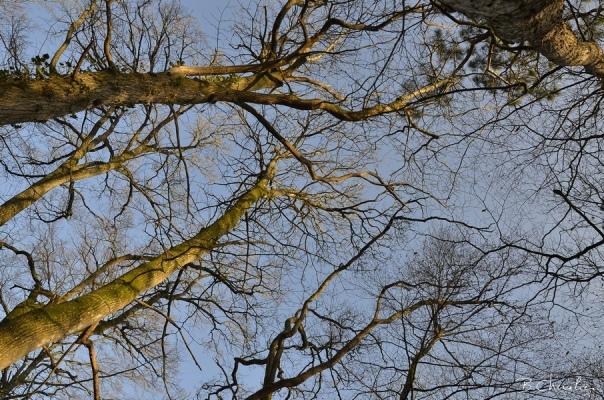blog-bc-2019-6 l'arbre en hiver