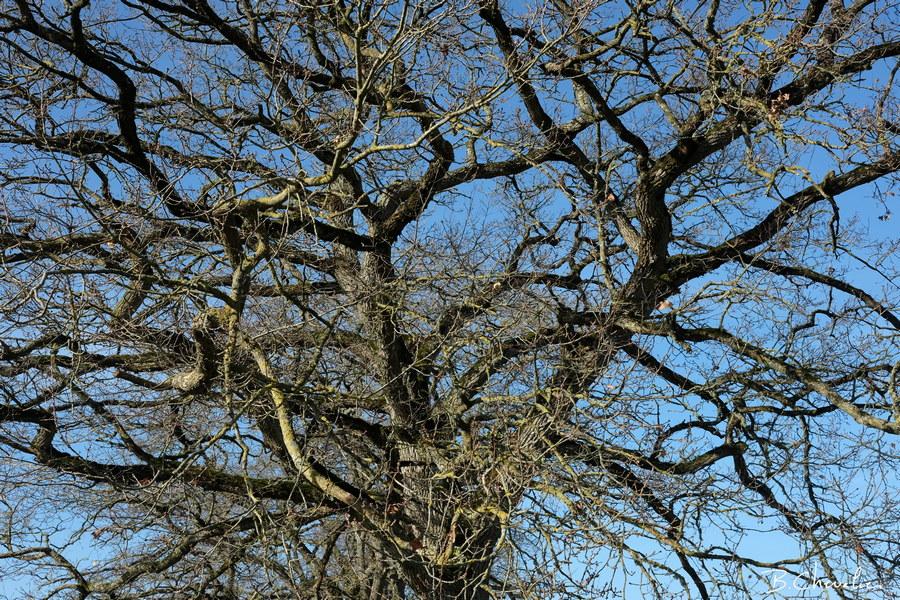 blog-bc-2019-11-structure arborescente