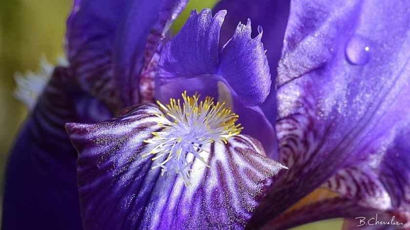 blog-bc-2019-19-Iris