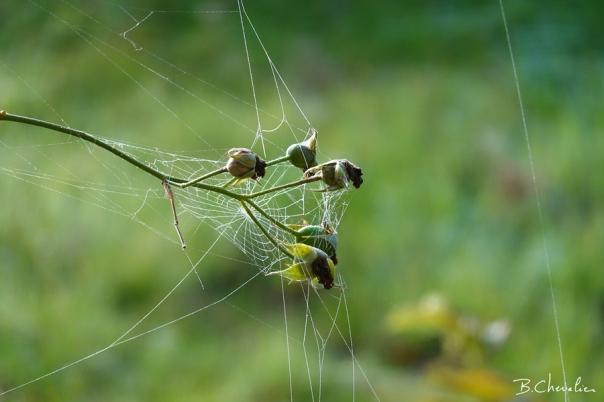 blog-bc-2019-34-toile d'araignée